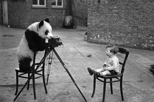 panda-boy-chair-photographer-Favim.com-467225